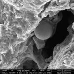 3-fosilised-algae-and-bacte